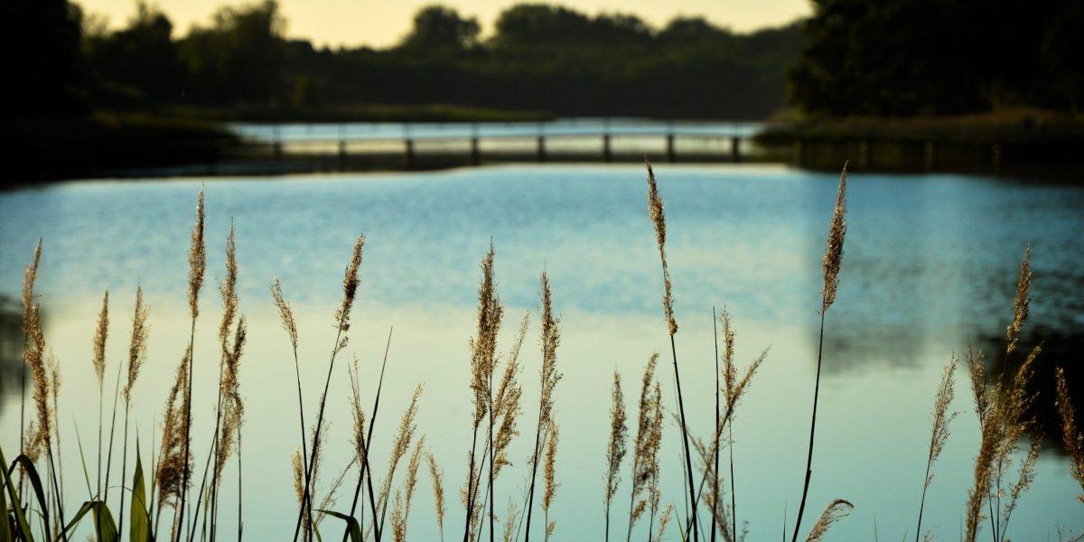 Zdjęcie przedstawia źdźbła traw na których tle maluje się błękitne jezioro z pomostem. W oddali las. Pora jest wieczorowa.