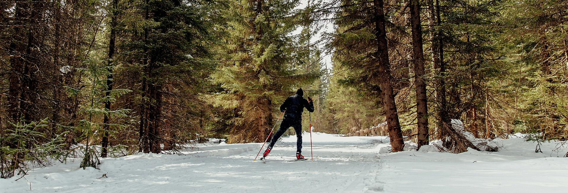 Narciarz na nartach biegowych podczas zimowej jazdy na leśnej ścieżce. Wokół ścieżki las pokryty śniegiem.