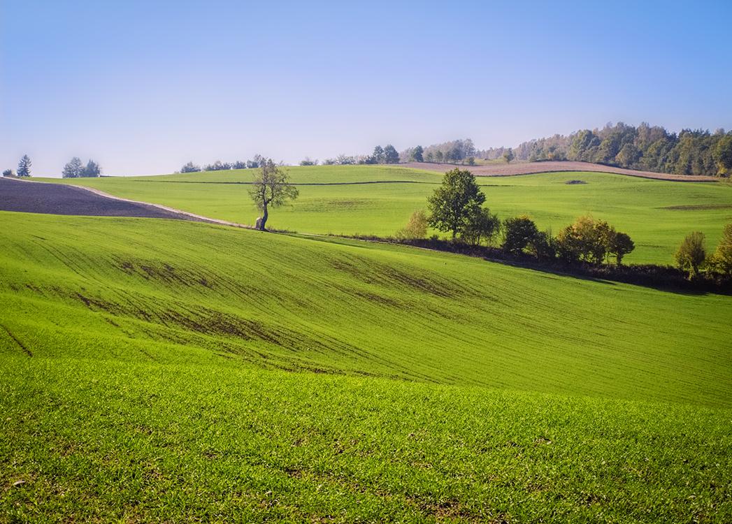 Zdjęcie przedstawia zielone pola w Parku Krajobrazowym Wzgórz Dylewskich.