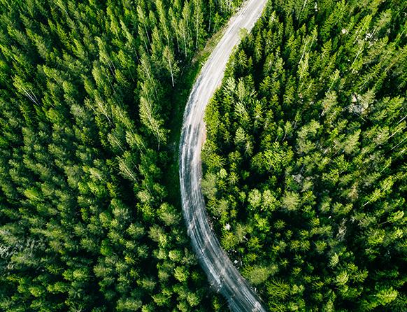 Zdjęcie ukazuje widok z lotu ptaka asfaltowej drogi biegnącej łukiem pomiędzy żywo zielonymi wysokimi drzewami iglastymi.