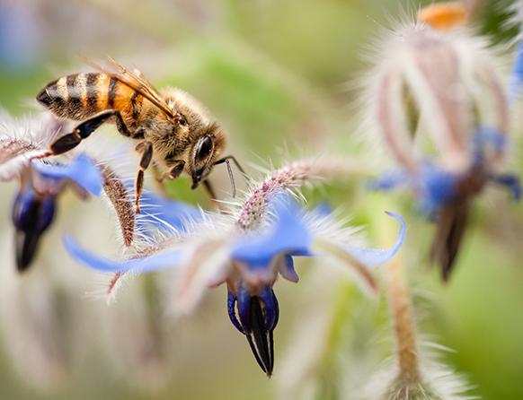 Zbliżenie Osy, owada, który siedzi na kwiecie i szuka pożywienia nektaru rośliny.