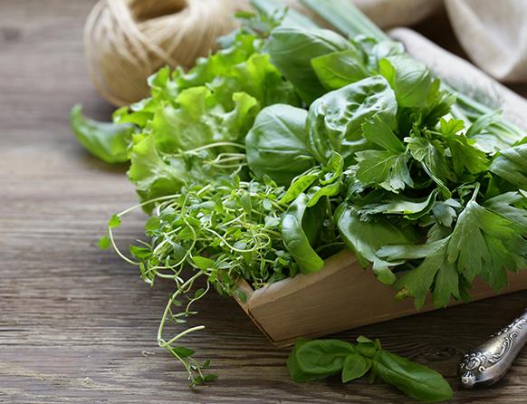 Na stole na drewnianej tacy bukiet zieleniny - sałata, natka pietruszki i rzeżucha.
