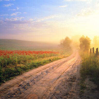Zdjęcie przedstawia piaskową drogę pomiędzy polami maków, nad którą unosi się poranna mgła. Obok drogi pole z kwiatami maku.