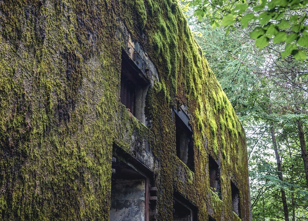 Zdjęcie przedstawia fragment porośniętego zielonym mchem muru bunkru niemieckiego w Mamerkach na mazurach.  W Mamerkach znajduje się jeden z najlepiej zachowanych w Polsce kompleks niezniszczonych bunkrów niemieckich z okresu II wojny światowej – Kwatera Główna Niemieckich Wojsk Lądowych.