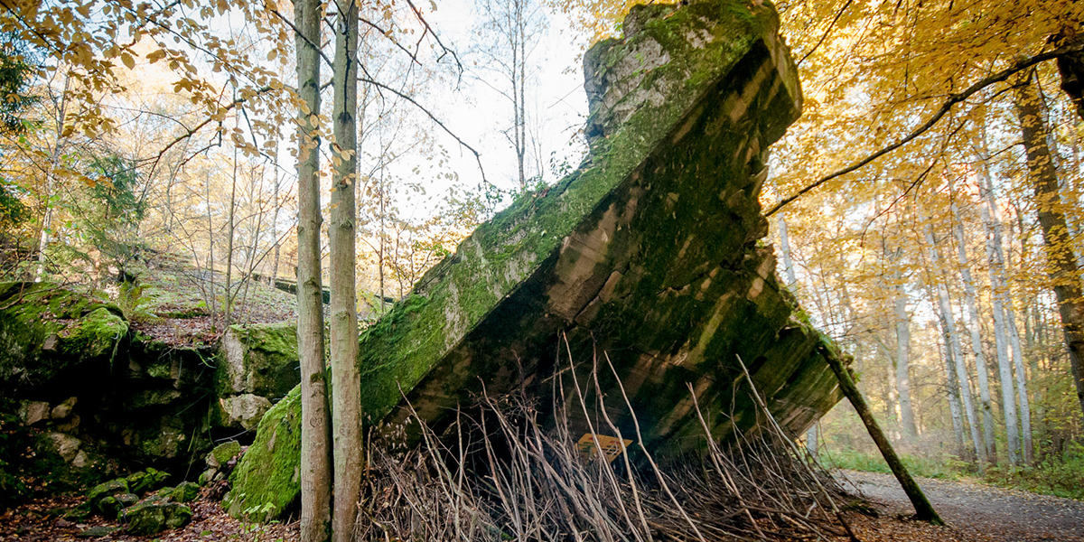 Na zdjęciu pośrodku jesiennego lasu widnieje fragment żelbetowej grubej ściany opadający w stronę ziemi. Przed upadkiem solidnej konstrukcji porośniętej zielonym mchem chronią ustawione cienkie gałęzie. Jest to pozostałość po głównej kwaterze Hitlera czyli Wilczy Szaniec w Gierłoży.