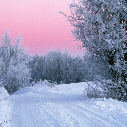 Zdjęcie pokazuje ośnieżoną drogę prowadzącą do lasu gdzie drzewa są w szronie. Niebo jest różowe.