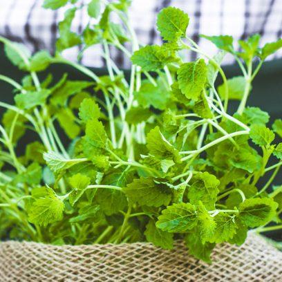 Bukiet zielonych ziół umieszczonych w worku z ziemią, a przy nim stoi ogrodnik ubrany we flanelowej koszuli w kratę.