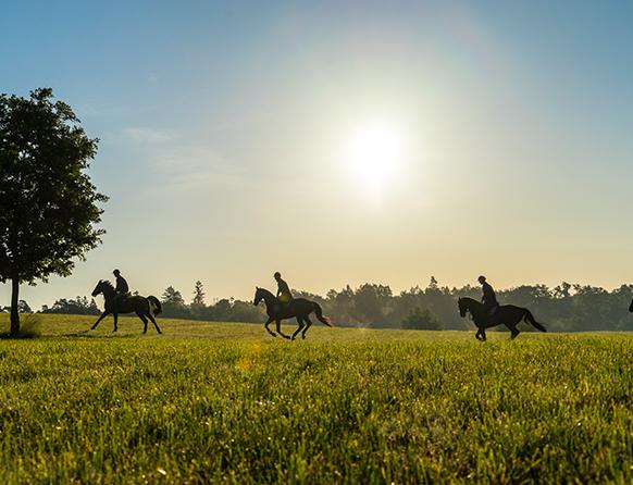 Zdjęcie pokazuje bujną równo ściętą zieloną łąkę, na której w oddali biegną trzy konie z jeźdźcami. Słońce na bezchmurnym niebie schodzi ku zachodowi.