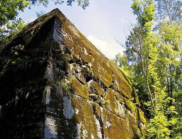 Na zdjęciu pośród wysokich drzew widnieje fragment żelbetowego budynku porośniętego zielonym mchem. Mury te niegdyś były polową kwaterą Himmłera znajduje się koło wsi Pozezdrze.