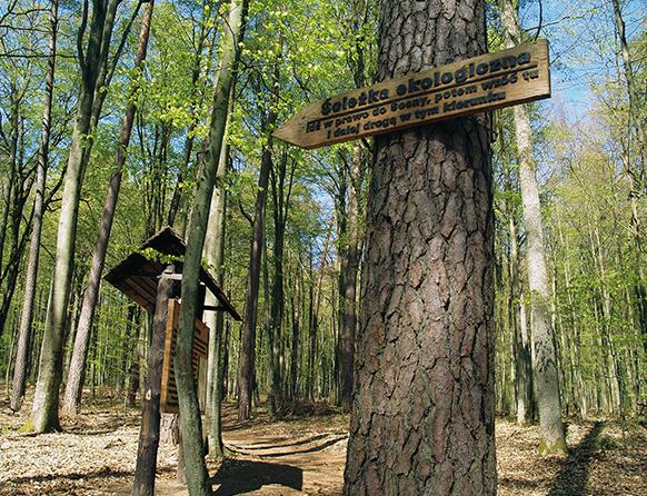 Drewniany drogowskaz przybity na szlaku w lesie do drzewa, informujący o kierunki marszu. Obok drzewa stoi tablica informacyjna z opisem ścieżki ekologicznej.