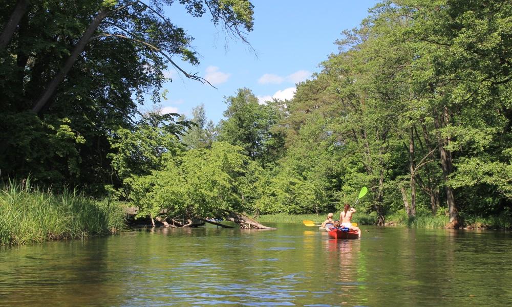 Spływ rzeką Krutynią. Na zdjęciu dwa dwuosobowe kajaki podczas spływu rzeką. Po obu stronach brzegu rzeki las. Obok kajaków po prawej stronie kajakarze mijają zwalone drzewo w połowie zanurzone w wodzie.