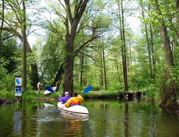 Spływ rzeką Dajną. Na zdjęciu dwa białe kajaki, jeden jest już wciągnięty na brzeg rzeki drugi z dwoma kajakarzami dopływa do brzegu. Obok kajaka znak informujący o kierunku spływu i położonym nieopodal na szlaku jeziorze Kot.