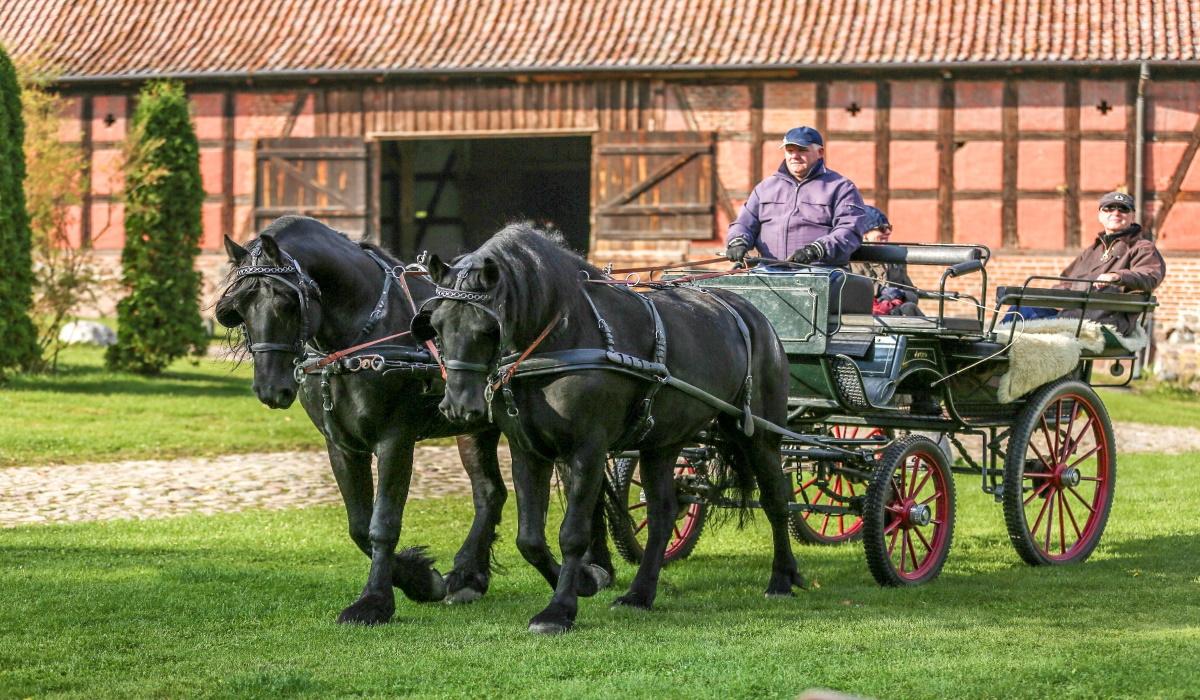 Zdjęcie przedstawia jadącą bryczkę z woźnicą oraz osobą towarzyszącą, wyjeżdżającą ze stadniny w Pałacu w Galinach.