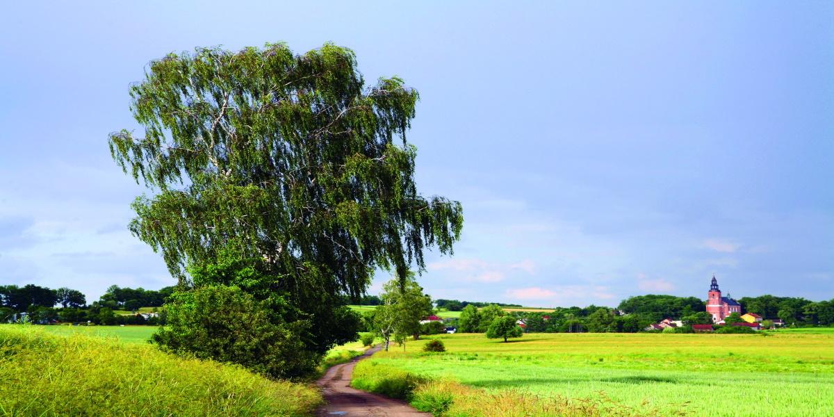 Zdjęcie na pierwszym planie przedstawia pola porośnięte zieloną trawą, przedzielone drogą polną a obok drogi duże liściaste drzewo. W oddali pod lasem miejscowość Głotowo z bardzo widoczna wieżą Sanktuarium Najświętszego Sakramentu Sakramentu.
