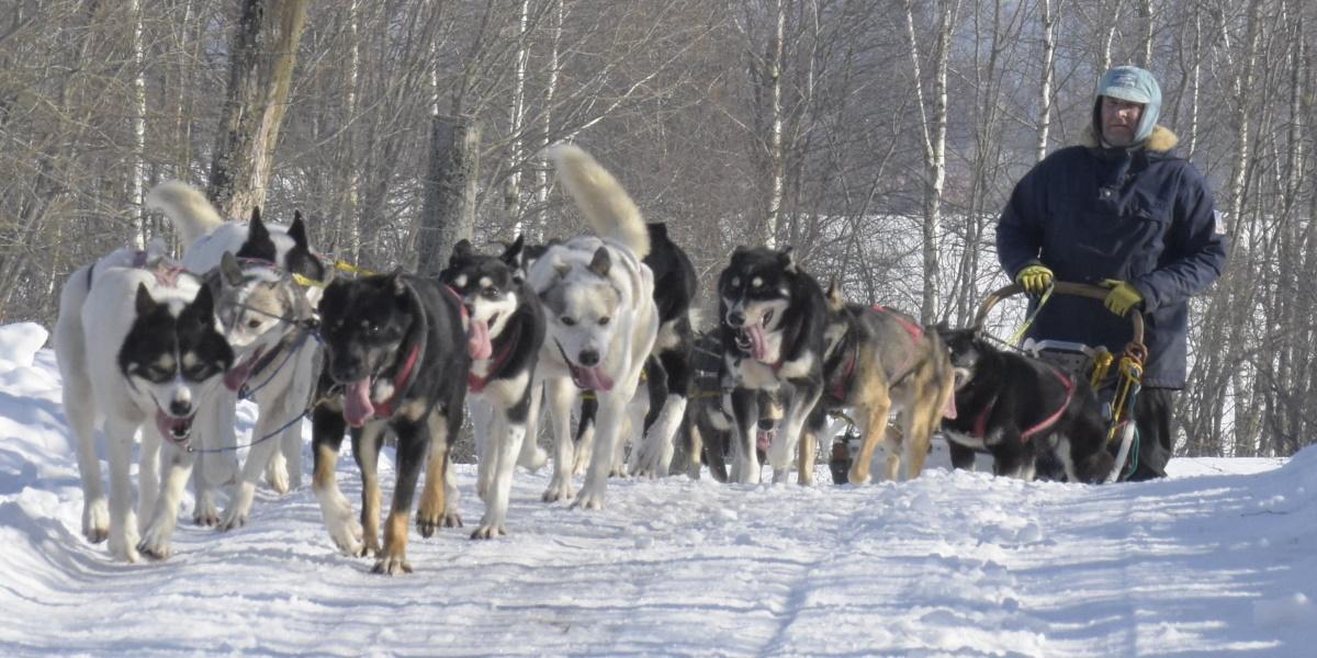 Zima w Republice Ściborskiej. Na zdjęciu psy w zaprzęgu ciągnące sanie z mężczyzną.