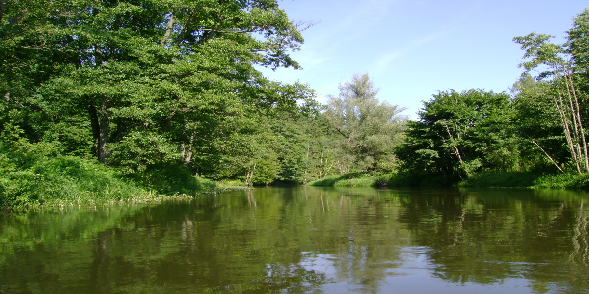Rzeka Łyna latem.