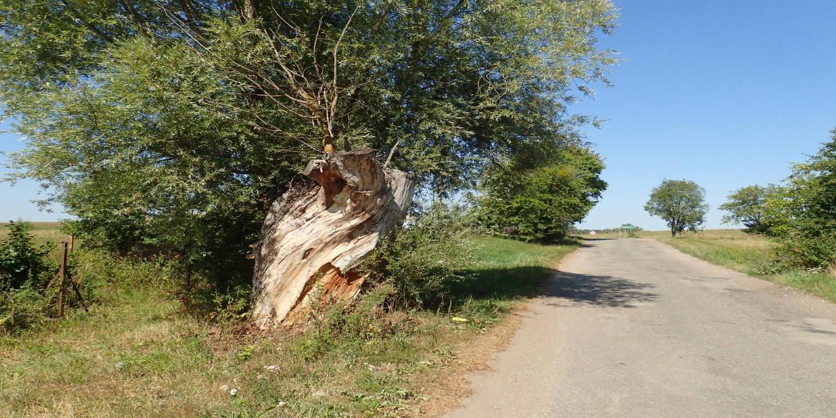 Ścieżka rowerowa w gminie Lidzbark Warmiński. Na zdjęciu wąska asfaltowa droga.
