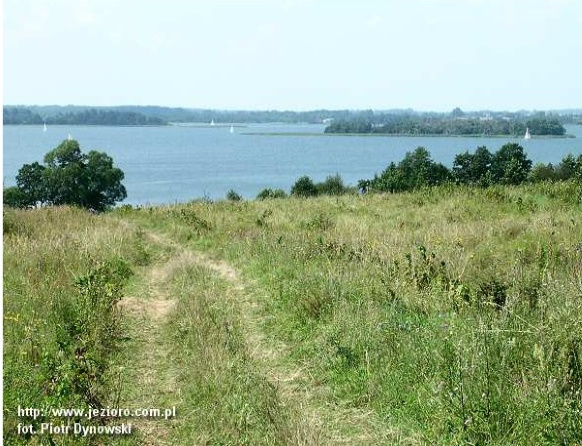Panorama jeziora Dobskiego z lądu. Na zdjęciu widzimy łąkę a w oddali panoramę jeziora z wyspą.