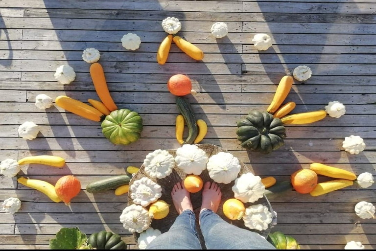 Warzywa - różne rodzaje dyń i kabaczków rozłożone w okręgu.