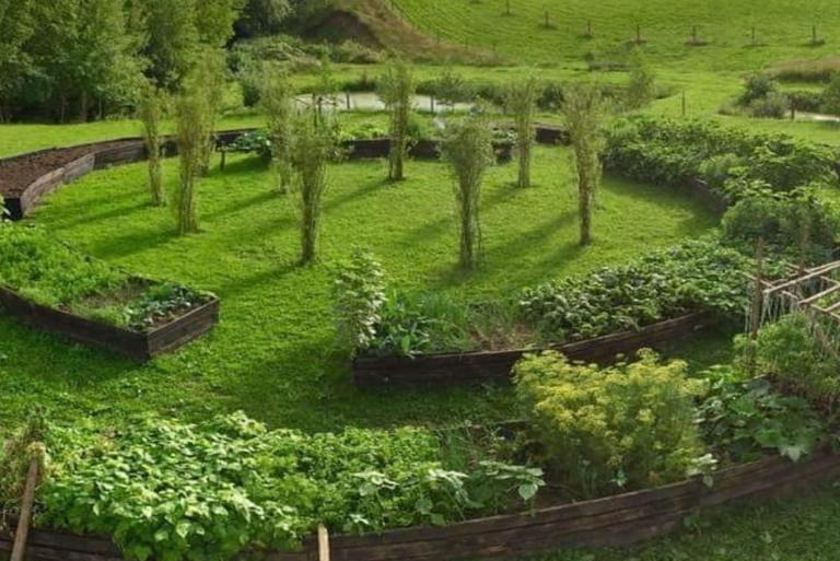 Na zdjęciu tzw. podniesione grządki w których posadzone są warzywa.