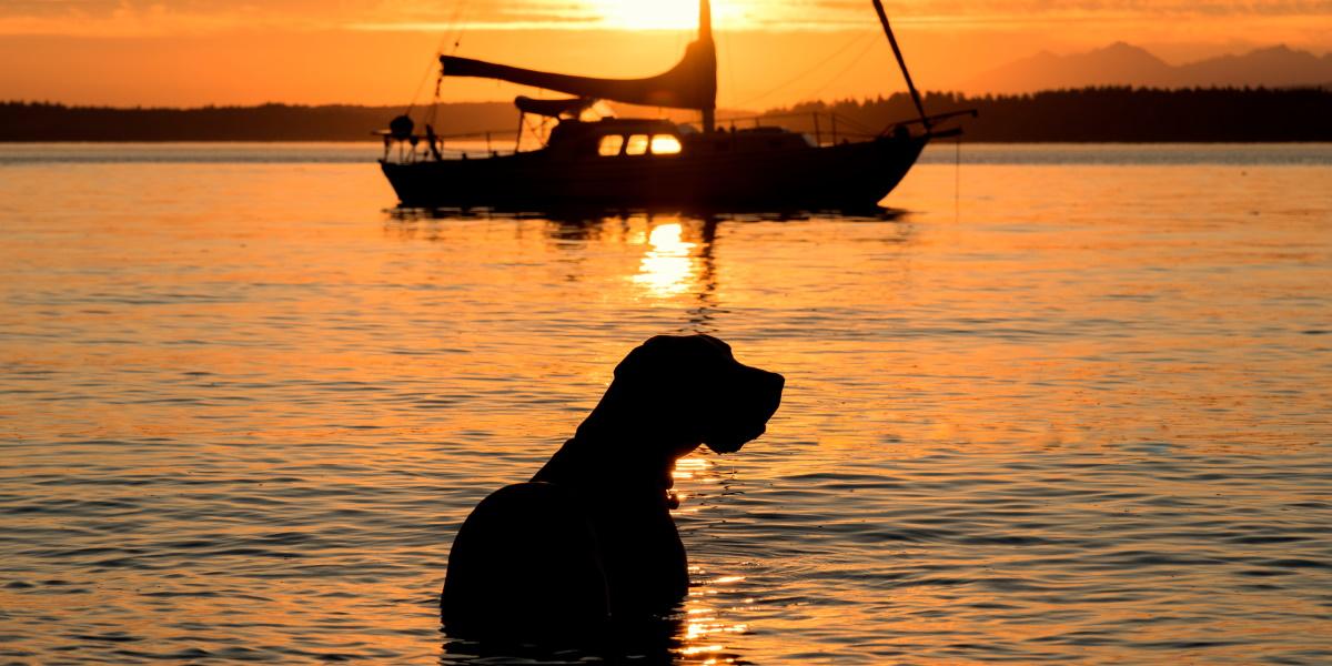 Zdjęcie o zmierzchu przedstawiającego na pierwszym planie psa wychodzącego z wody a na drugim planie żaglówkę przycumowaną do boi na jeziorze.
