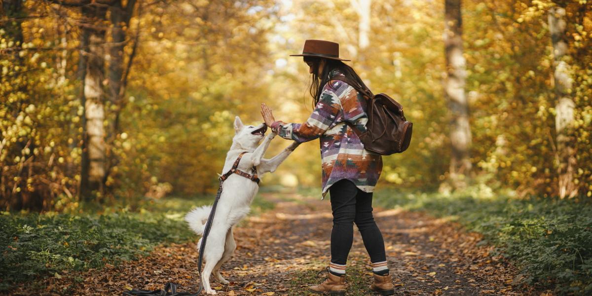 Kobieta bawiąca się z psem na ścieżce w lesie. Zdjęcie przedstawia las podczas jesieni.