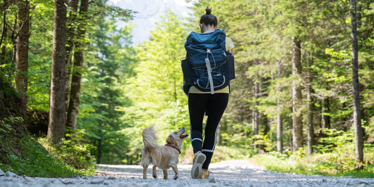 Spacerująca kobieta z psem po ścieżce w lesie.