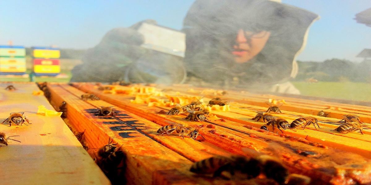 """Zagroda Edukacyjna """"Warmińska Pszczoła"""" w Purdzie."""